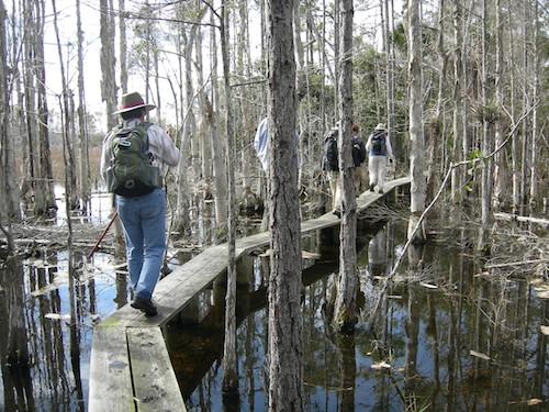 Loxahatchee Slough Natural Area stretch of the Florida Trail via Winnie Lo