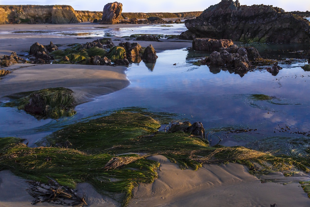 The tide pools of Cayucos make it one of the prettiest California beach towns.