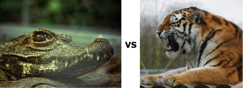 Photo: Gator by Scott McCallum, Flickr CC | Tiger by GRVO TV, Flickr CC