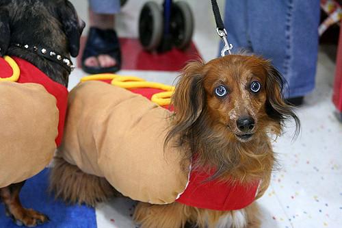 Photo: Flickr   David K, Hot Dog