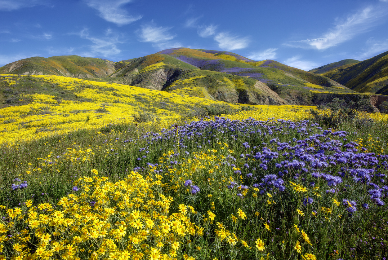 Carrizo Plain National Monument - Painting With Wildflower Color